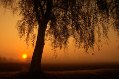 Tree at sunrise. A tree at sunrise with a foggy sky stock photo
