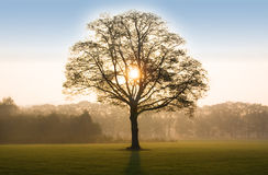 Tree in sunrise with backlit Stock Image