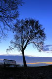 Tree and bench on the sunrise Royalty Free Stock Photos