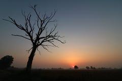 Burnt tree. Tree sunrise burnt Stock Images