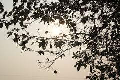 Tree with Sunrise.It looks god gift wallpaper royalty free stock photos