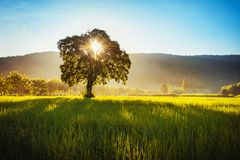 Tree and sunrise over mountain. In nature royalty free stock photo