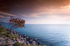 Tree and sunrise by the sea Stock Photos