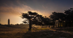 Tree at sunrise Royalty Free Stock Photography