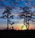 Tree at sunrise. Style image Stock Image