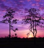 Tree at sunrise. Style image Stock Photo