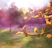 Tree at sunrise sun burst. abstract background. dreamy concept. image is retro filtered royalty free stock images