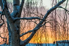 Tree at sunrise in winter Stock Image