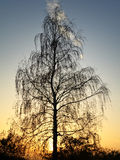 Tree at sunset Royalty Free Stock Photo