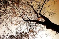 Tree sunset Stock Photos