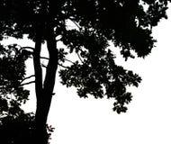Tree on sunset Royalty Free Stock Image