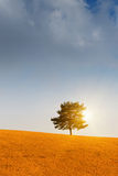 Tree and sunset. Lonely tree and sunset with the blue sky Stock Photos