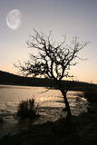 Tree at sunset. With the moon in the sky Royalty Free Stock Photos