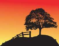 Tree sunset. Lonely tree at sunset. Vector illustration Royalty Free Stock Photo