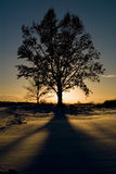 Tree and sunset Stock Image