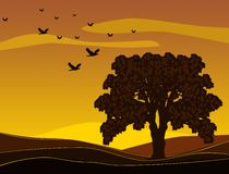Tree on the sunset. Illustration of the tree and birds in the sunset Royalty Free Stock Photography