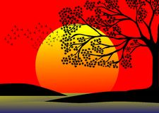 Tree at sunset with sun and birds. Image representing a tree at sunset on a shore of a lake Stock Images