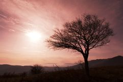 Tree on sunset Royalty Free Stock Photography