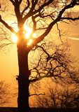 Tree at sunset. In Poland Stock Photo