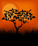 Tree in the sunset. Kind of Urban Art Tree in the sunset between black and orange color Stock Photos