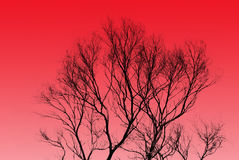 Tree and sunset Royalty Free Stock Images
