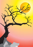 Tree at sunset. A vector illustration, tree in the shadow at sunset Royalty Free Stock Photo