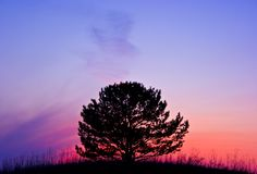Tree at sunset Stock Images
