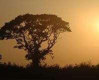 Tree in sunset Stock Photo