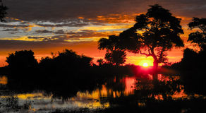 Tree at Sunset, African Sunset Stock Image
