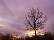 Tree Sunset against a purple sky Stock Image