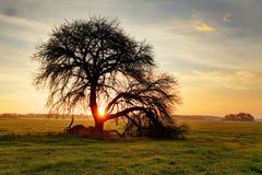 Tree on sunset Stock Photos