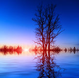 Tree on sunset background sky Royalty Free Stock Images