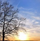 Tree on sunset backgrouund. Large oak tree in winter in front of sunset royalty free stock photography