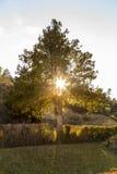 Tree at sunset Stock Image