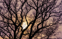Tree at sunset Royalty Free Stock Images