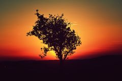 Tree sunset Royalty Free Stock Photography