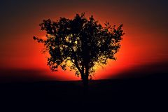 Tree sunset Stock Photography