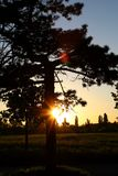 Tree sunset 001. A really beautyful lanscape scene with trees in the sun stock image