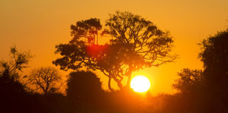 Tree at Sunset in Botswana. Okavango Delta. Africa. Royalty Free Stock Photos