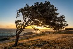 Tree and Sunset - Cape Town - South Africa Royalty Free Stock Photo