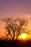 Tree on sunset. In the field Stock Photo