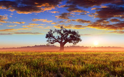 Tree On Sunset Field Stock Image