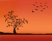 Tree in sunset with flying birds. Decorative tree with swirled branches,  in sunset Royalty Free Stock Images