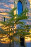 Tree at sunset. Tree in front of church at sunset, Victoria, BC, Canada Royalty Free Stock Photography