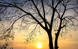 Tree with Sunset Stock Image