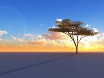 Tree on Sunset Horizon. A lone Umbrella Acacia tree on a flat sunset horizon Stock Photos