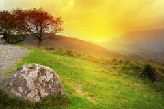 Tree at sunset in irish mountains Royalty Free Stock Photos