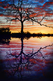 Tree at sunset lake Royalty Free Stock Images