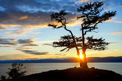Tree during Sunset on Lake Baikal Royalty Free Stock Photo