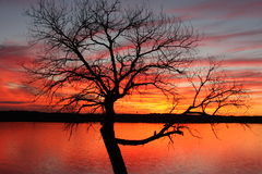 Tree at Sunset. Lake Weatherford is on the Trinity River in eastern Parker County. Construction on the dam started in June of 1956 Royalty Free Stock Photography